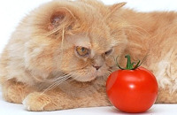 Five Myths About Foods That Are Toxic To Cats